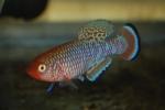 fwkillifish&1539809403 Thumbnail