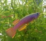 fwkillifish&1540011663 Thumbnail