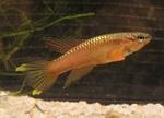 fwkillifish&1558377866 Thumbnail