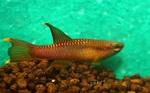 fwkillifish&1558378019 Thumbnail