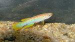 fwkillifish&1558378115 Thumbnail
