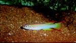 fwkillifish&1558378426 Thumbnail