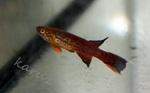 fwkillifish&1558378513 Thumbnail