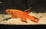 fwkillifish&1558378591 Thumbnail