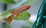 fwkillifish&1558378855 Thumbnail