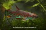 fwkillifish&1558389537 Thumbnail