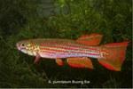 fwkillifish&1558389572 Thumbnail