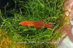 fwkillifish&1558389602 Thumbnail