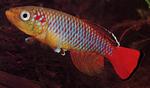 fwkillifish&1558389648 Thumbnail