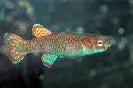 fwkillifish&1558390126 Thumbnail