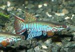 fwkillifish&1558545748 Thumbnail