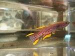 Thumbnail for fwkillifish1571789412