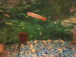 Thumbnail for fwkillifish1571854801