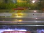 Thumbnail for fwkillifish1573798804