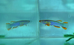 fwkillifish&1581968078 Thumbnail
