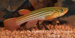 fwkillifish&1581968231 Thumbnail