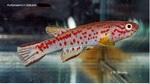 fwkillifish&1581968435 Thumbnail