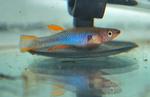fwkillifish&1581968537 Thumbnail