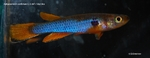 fwkillifish&1581968604 Thumbnail