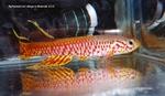 fwkillifish&1581969496 Thumbnail