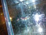 fwkillifish&1581970001 Thumbnail
