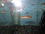 fwkillifish&1582222205 Thumbnail