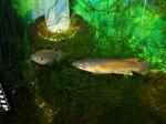 Thumbnail for fwkillifish1586557204