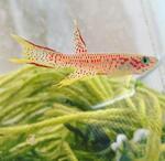 Thumbnail for fwkillifish1590854983