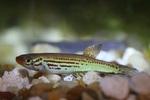 fwkillifish&1600567368 Thumbnail