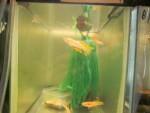 fwkillifish&1600574419 Thumbnail