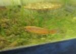 fwkillifish&1600574420 Thumbnail