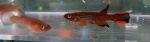 fwkillifish&1600649327 Thumbnail