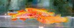 fwkillifish&1600652050 Thumbnail