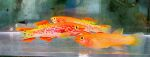 fwkillifish&1600655384 Thumbnail