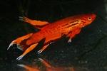 fwkillifish&1600665519 Thumbnail