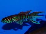fwkillifish&1600665612 Thumbnail