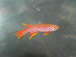 fwkillifish&1600681630 Thumbnail