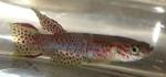 fwkillifish&1600681662 Thumbnail