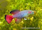 Thumbnail for fwkillifish1606973942