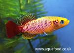 Thumbnail for fwkillifish1606974549