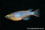 fwkillifish&1612078882 Thumbnail