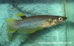 fwkillifish&1612457354 Thumbnail