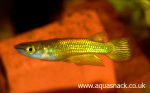 fwkillifish&1612457356 Thumbnail