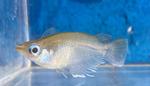 fwkillifish&1624490837 Thumbnail