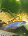 fwkillifish&1624731796 Thumbnail