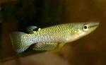 fwkillifish&1624817347 Thumbnail