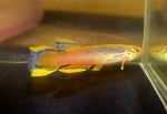fwkillifish&1624817348 Thumbnail