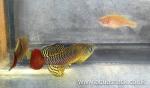 fwkillifish&1624963142 Thumbnail