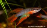 fwkillifish&1625040551 Thumbnail