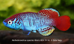 Thumbnail for fwkillifishe1566400481